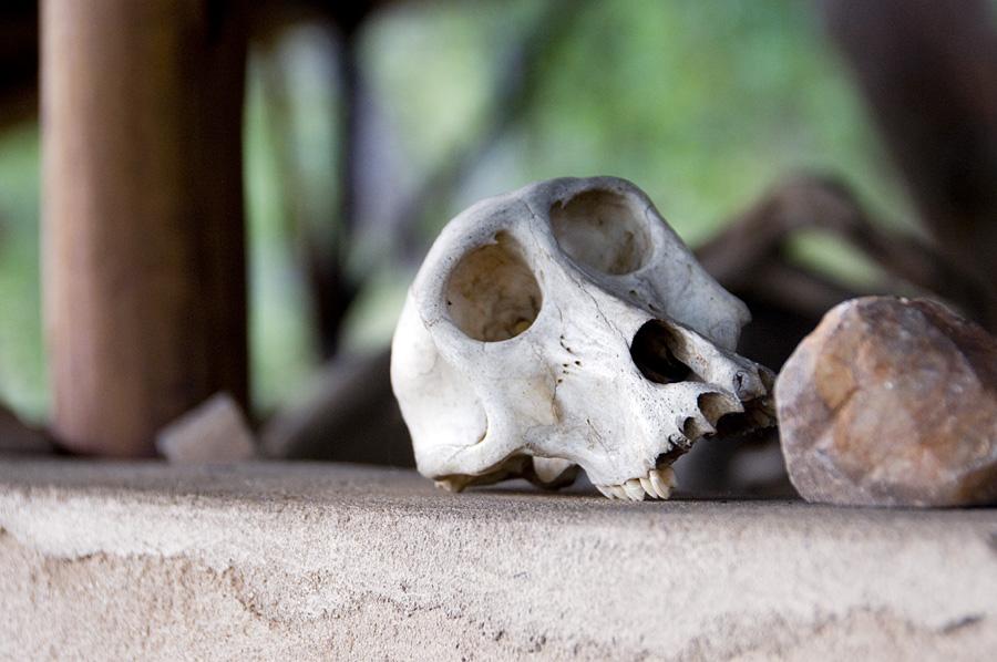 lukwe_baboon skullLR